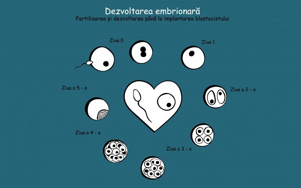 totuldespreavort_dev_embrion